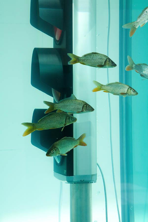 28-Fishtank3